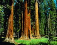 Alcatraz Tour plus Muir Woods, Giant Redwoods and Sausalito Day Trip