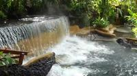 Private Tour to the Arenal Volcano and Tabacon Hot Springs