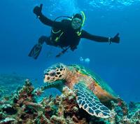 Nassau Shore Excursion: 2-Tank Dive Adventure*