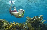 Bahamas Snorkel Adventure*