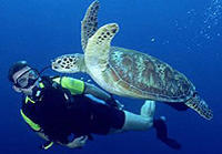 Learn to Dive - Puerto Vallarta Beginners Scuba Course