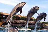 Nuevo Vallarta Dolphin Swim Experience