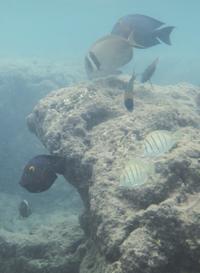 Hanauma Bay Snorkeling Adventure Half-Day Tour