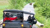 Alaska Side By Side Nature Safari