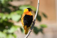 Hawaii Birdwatching Small Group Adventure Tour