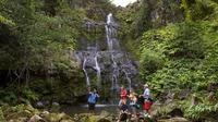 Swim Kohala Falls