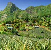 Half-Day 4WD Tour of Moorea Including Lycée Agricole