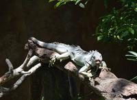 Croco Cun Zoo Guided Tour