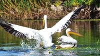 3-Day Private Tour Exploring Wildlife in Danube Delta from Bucharest 3 Boat Rides 6 Meals