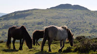 Plymouth and Dartmoor One day private highlights tour from Cornwall