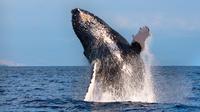Whale Watching EcoAdventure
