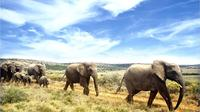 Full-Day Addo Elephant National Park Safari From Port Elizabeth
