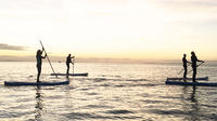 Stand Up Paddle Boarding Taster Session in Saundersfoot