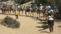 Camel Riding in Maspalomas Dunes