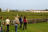 Bordeaux Vineyards Wine Tasting Half-Day Trip