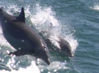 Waverunner Dolphin Excursion
