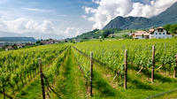 Half-Day White Wine tour from Lake Garda and visit of Borghetto hamlet