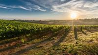 Half-Day Wine tour from Lake Garda