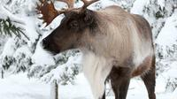 Ecomuseum Zoo: Discover Québec's Wildlife in Winter