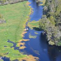 Busch Gardens And Alafia River Wildlife Helicopter Tour