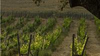 Private Wine Tasting and Tapas in Wine Cellar in Ronda