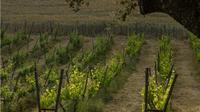 Ronda Region Winery Private Tour with Wine and Tapas Tastings from Marbella