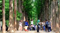 Full Day Nami Island and Petite France Tour from Seoul