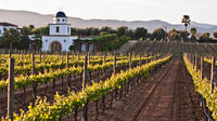 Baja Mexico Winery and Vineyard Tour