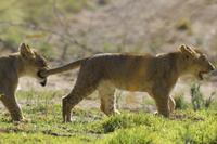 San Diego Safari Park Transportation and Admission