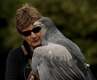 International Centre for Birds of Prey Entrance Ticket