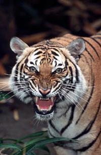 San Diego Zoo and Safari Park Combo Tour