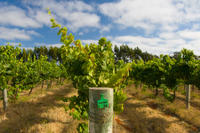 Margaret River Winery*