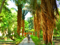 Aswan Botanic Garden*