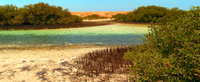 Private Tour: Mangroves*