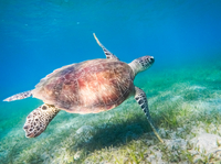 Red Sea Snorkeling*