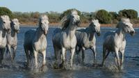 Small-Group Half Day tour of Arles and Camargue from Avignon