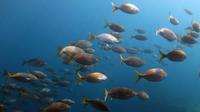 Marine Reserve Diving in Gran Canaria