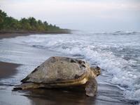 Tortuguero National Park*
