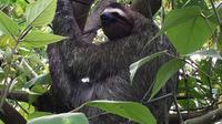 Jaguar Rescue Center And La Ceiba Private Reserve Tour From Limon