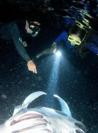 Manta Ray Night Snorkel from Kona