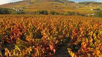 Private Tour: Cycling the Beaujolais with Wine Tasting from Lyon
