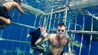 Oahu Shark Dive