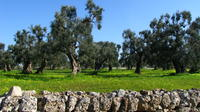 Puglia Countryside Tour with Oil Mill Visit and Extra Virgin Olive Oil Tasting
