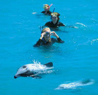 Akaroa Harbour and Banks Peninsula Eco Marine Harbour Cruise Small Group Tour