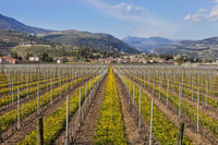 Valpolicella Day Trip from Venice: Wine Tasting and Verona