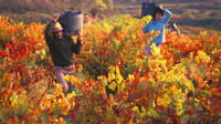 Autumn in La Rioja Wineries Tour from San Sebastian with Lunch