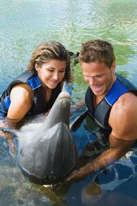 Anguilla Day Trip by Catamaran from St Maarten Including Dolphin Discovery
