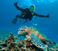 St Maarten Scuba Diving for Certified Divers