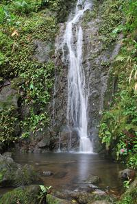 Oahu Volcanic Rainforest Hiking Adventure