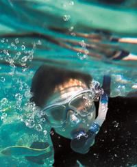 Snorkel with Sharks at SEA LIFE Sydney Aquarium